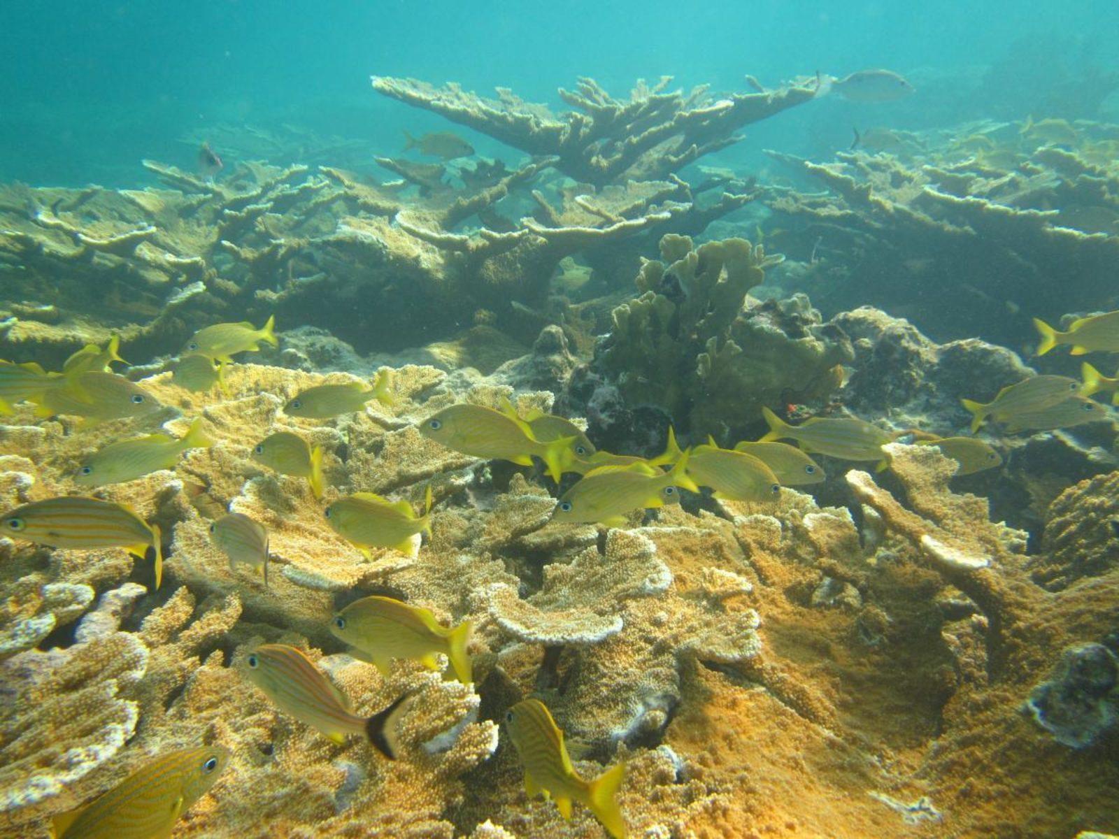 Baggermuseum 2017 03 23 Reef Guard
