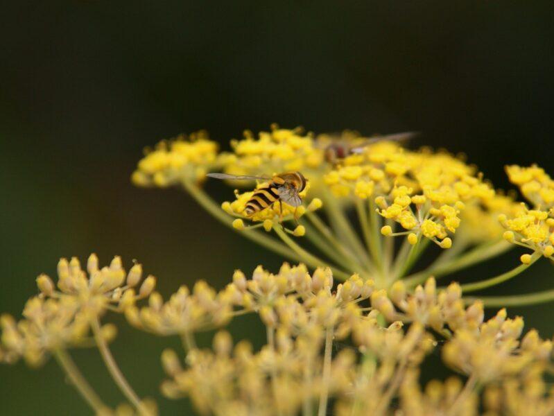 Flora en Fauna (Wet Natuurbescherming)